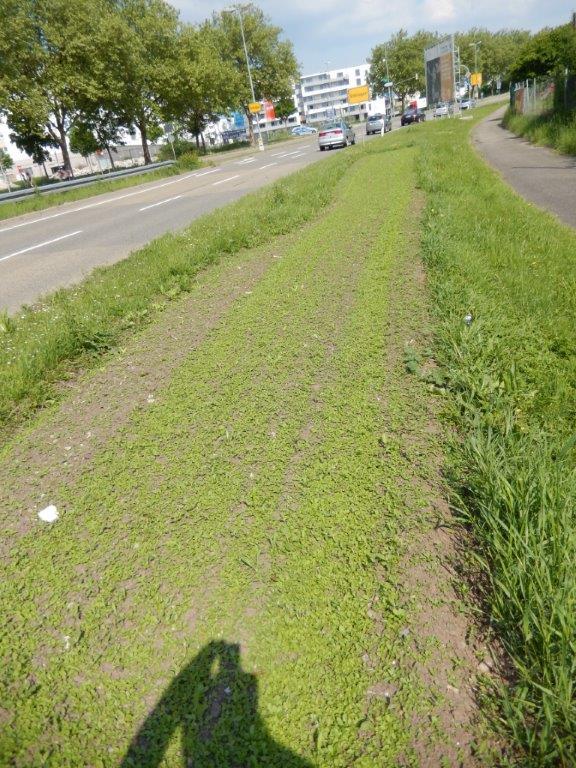 Unsteamed flower bed at Calwer street in Böblingen - weeds are everywhere