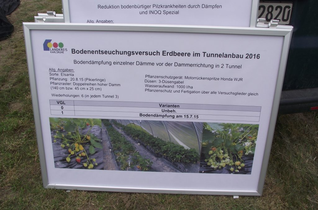 Diagram showing results of steam treatment in strawberry cultivation